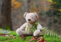 teddy-bear-524251_1920
